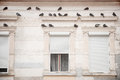 Pigeons On A Building Facade Stock Photography - 47209642
