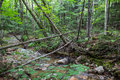 Stream In The White Mountains Of New Hampshire Royalty Free Stock Photo - 47253725