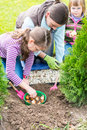 Mother And Daughters Planting Tulip Bulbs Stock Images - 47273364