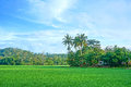 Landscape Of Rice Field Stock Photos - 47287423