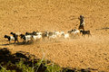 Herder With Goats At The Archaeological Site Of Bagan On Myanmar Stock Photography - 47312252