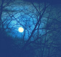 Full Moon In A Dark Forest Royalty Free Stock Photo - 47324305