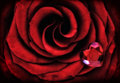 Macro Red Rose With Crystal Heart Stock Image - 47326151
