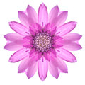 Pink Mandala Flower Ornament. Kaleidoscope Pattern Isolated Stock Image - 47359171