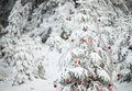 Forest Christmas Tree Stock Image - 47435831