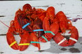 Lobster Stock Image - 47465451