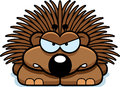 Angry Little Porcupine Royalty Free Stock Photo - 47479555