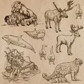 Animals Around The World (part 5). Hand Drawn Vector Pack. Royalty Free Stock Photos - 47487938