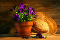 Purple Pansies With Old Straw Hat Stock Photo - 4750070