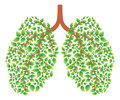 Healthy Lungs Royalty Free Stock Photo - 47500795