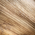 Close Up Texture Of Dried Palm Leaf Stock Photos - 47501803