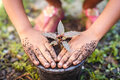 Close Up Hand Of Children Holding Plant And Soil Royalty Free Stock Photos - 47508728
