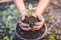 Close Up Hand Of Children Holding Plant And Soil Stock Image - 47508751
