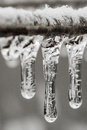 Icing Rain On Plant Branch Stock Images - 47563524