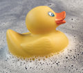 Duck And Foam Stock Photography - 47572432