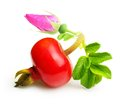 Rose Hip Isolated On White Royalty Free Stock Photos - 47576848