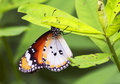 Tropical Butterfly Stock Photography - 47577922