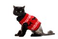 Black Cat Wearing In A Red Christmas Cardigan Royalty Free Stock Photos - 47614828