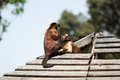 Monkeys On The Roof Royalty Free Stock Photography - 47631097