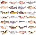 Fish Collection Stock Photography - 47659232