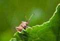 Vermin Bug Stock Images - 47660024