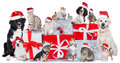 Group Of Pets In A Row With Santa Hats Royalty Free Stock Image - 47688456