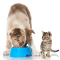 Puppy And Kitten Royalty Free Stock Images - 47694249