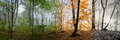 Beautiful Morning Scene In The Forest, Change Of Four Seasons Stock Photos - 47742833