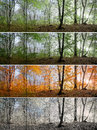 Beautiful Morning Scene In The Forest, Change Of Four Seasons Stock Images - 47743044