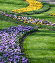 The Big Amount Of Purple And Yellow Crocuses Growing In Park Stock Photo - 47744150