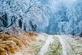 Winter Path Going Through Frozen Forest Stock Image - 47749261