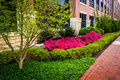 Colorful Trees And Bushes Along A Sidewalk In Downtown Richmond, Stock Images - 47754284