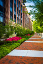 Colorful Trees And Bushes Along A Sidewalk In Downtown Richmond, Royalty Free Stock Photo - 47754325
