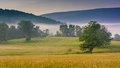 View Of Trees In A Farm Field And Distant Mountains On A Foggy M Royalty Free Stock Photos - 47769348