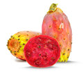 Prickly Pear Stock Image - 47784371