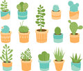 Succulent Mix Stock Images - 47785134