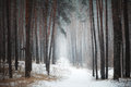 Path In Coniferous Forest In Winter Stock Photography - 47827672