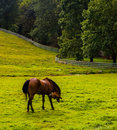 Horse In A Farm Field In Rural York County, Pennsylvania. Royalty Free Stock Photos - 47843898