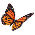 Butterfly Stock Images - 47855784