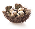 Birds Nest With Eggs Stock Images - 47856404