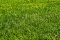 Green Grass Royalty Free Stock Photography - 4799637