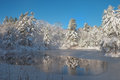 A Freshly Frozen Forest Pond Surrounded By Fresh Snow Covered Pi Royalty Free Stock Image - 47915466