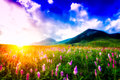 Sunset In A Flowery Meadow Stock Photo - 47938790