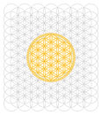 Development Of The Flower Of Life Stock Photo - 48000160