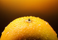 Orange Fruit Stock Images - 48043194