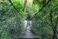 Hanging Bridge In A Rain Forest, Guatemala Stock Images - 48083244