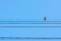 Birds Sitting On Power Lines Over Clear Sky Royalty Free Stock Photos - 48086718