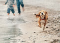 Beagle Puppy Running On The Sea Beach Stock Images - 48131794