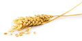 Wheat Ear Isolated On The White Background Stock Photo - 48160420