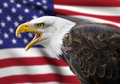 Bald Eagle Royalty Free Stock Images - 48162719